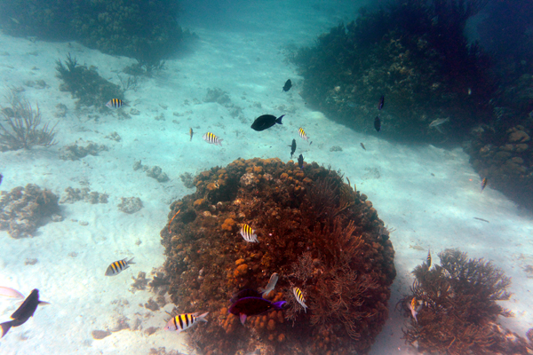 Coral Gardens Grand Cayman