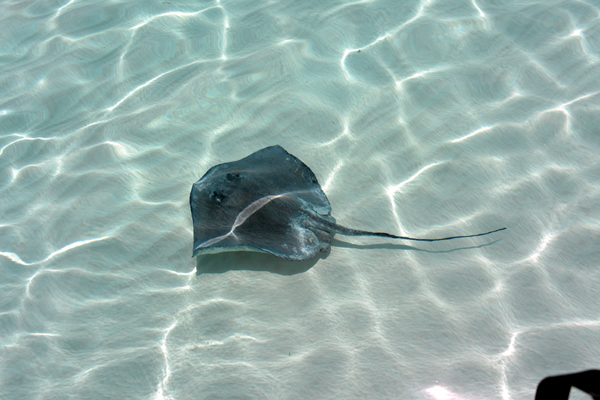 stingray city grand cayman excursions