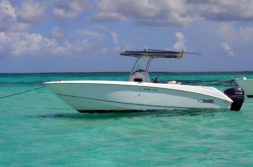 stingray-city-charters-3