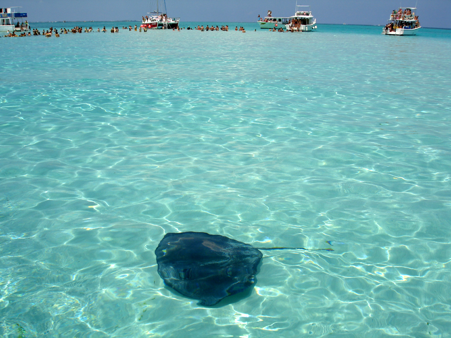 stingray city cayman charter
